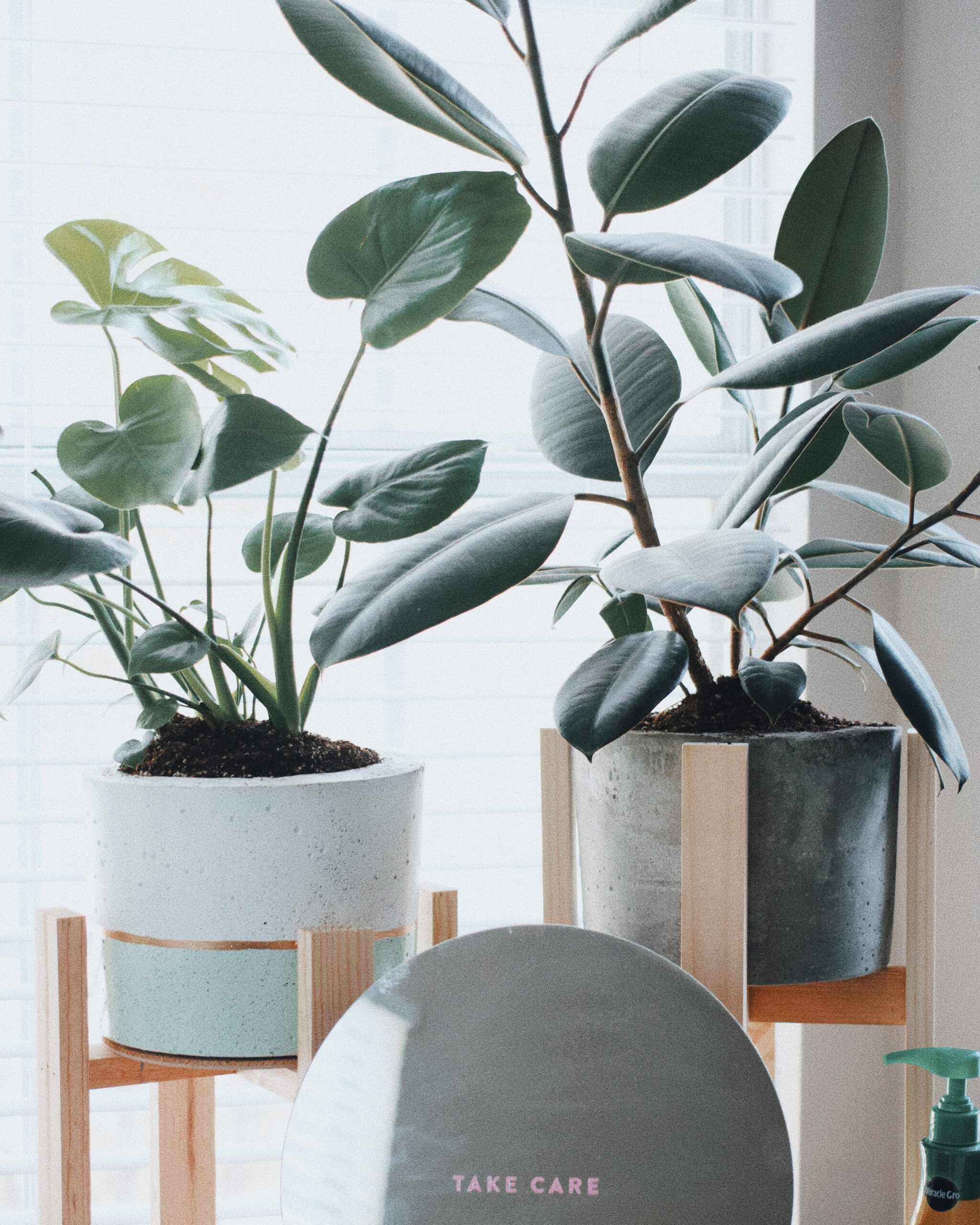 How Indoor Plants Can Boost Your Wellbeing